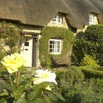 350thatched11