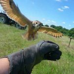 Falconry in Kent