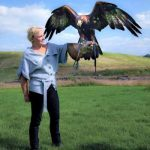 Falconry in North Yorkshire