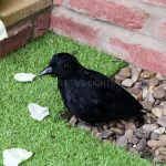 24cm Outdoor Crow Halloween Decoration